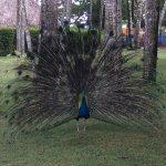 Foto de Iberostar Costa Dorada