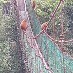 Photo of Borneo Rainforest Lodge