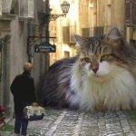 Esotika Arezzo, 24-25 febbraio fiera dei gatti prenota Hotel Aretino telò 0575294003