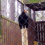 Valokuva: Carolina Raptor Center