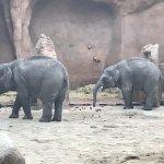 Photo de Rotterdam Zoo
