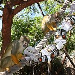 Squirrel Monkeys promoting Seafood Watch.