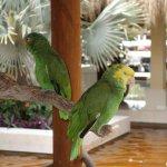 Foto de Iberostar Quetzal Playacar