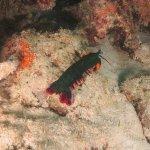 Dive Point Zanzibar Foto
