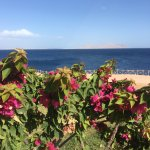 Coral Beach Resort Tiran Foto