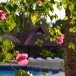 Photo de Dolphin-House Resort-SPA-Diving