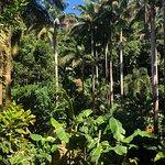 Photo de Hunte's Gardens