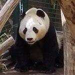 The zoo has 3 pandas.