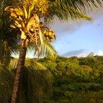 Coconuts at dawn