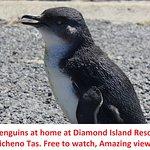 Diamond Island Resort & Penguin Show Foto