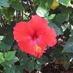 Amazing hibiscus flowers