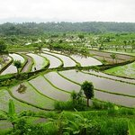 Nearby rice paddys