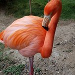 The Flamingos are a favorite and are usually friendly enough for a close up photo
