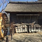 Photo of Daio Wasabi Farm