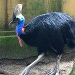 Bali Zoo의 사진