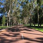 Kings Park & Botanischer Garten Foto