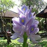 Photo de Puri Kelapa Garden Cottages