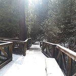 Photo de Pont suspendu et parc de Capilano