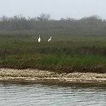 Part of a very large group of Whooping Cranes we saw on the tour