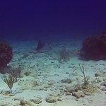Foto de Reef Gliders