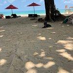 Photo of New Star Beach Resort