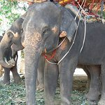 Photo of KokChang Safari Elephant Trekking