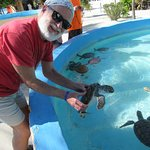You are taught how to hold the turtles for a photo.