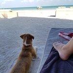 Photo de Holbox Hotel Casa las Tortugas - Petit Beach Hotel & Spa