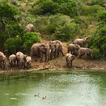 Photo of Kariega Game Reserve - Settlers Drift