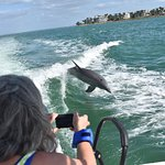 dolphins in the gulf lots of photo opps !