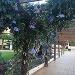 Photo of Hotel Best Jacaranda
