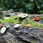 Discover Knysna Forest - taken on the walking trail, starting next to Forest Edge.