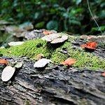 صورة فوتوغرافية لـ Forest Edge Nature-lovers' Retreat