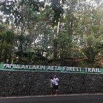 Pamulaklakin Forest Trail