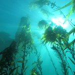 Kelp Forest. 40ft deep.