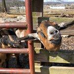 Kentucky Down Under Adventure Zoo의 사진