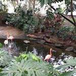 Foto de National Aviary