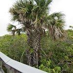 Foto de Barefoot Beach Preserve