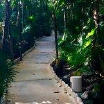 Path to villa through the jungle