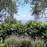 Foto Bodega Alta Vista