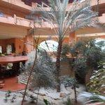 jardin intèrieur avec palmiers et autres plantes exotic