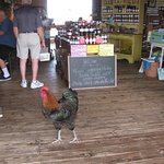 One of several roosters walking around INSIDE the store