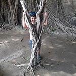 Photo de Maison arboricole d'Anping
