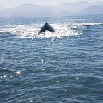 Photo of Whale Watching Photo Safari by Vallarta Adventures
