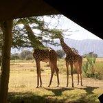 Chem Chem Safari Lodge照片
