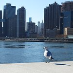 Photo of Franklin D. Roosevelt Four Freedoms Park