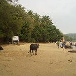 Photo of Om Beach