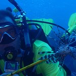 With Lion Fish