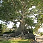 Purely Palm Beach Day Tour. Guide: Debbie Hudzik.