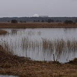 Across the scrapes towards Sizewell on a cold grey day